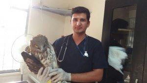 Kırkağaç'ta yaralı kartal tedavi edildi