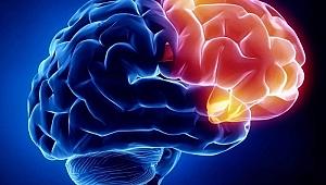 Nöroloji nedir?
