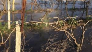Jeotermal havuzun taşması sonucu bağı su bastı