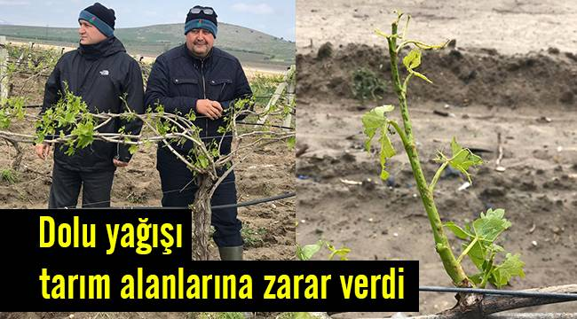 Dolu tarım alanlarına zarar verdi