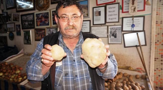 Yaklaşık 1 kilogramlık patates ilgi çekiyor