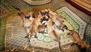 Tek tesellisi 18 köpek yavrusu oldu