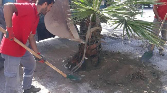 15 Temmuz Demokrasi Şehitleri Alanın'da Palmiye Dikimi Gerçekleşti