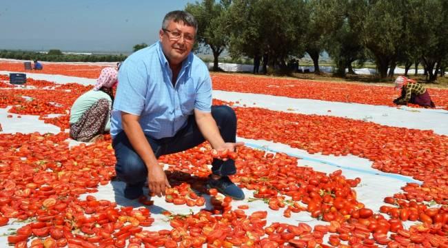Manisa'nın kurutmalık domatesleri Avrupa'ya ihraç ediliyor