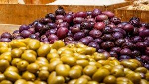 Gemlikli zeytin üreticisine de ibb'den destek