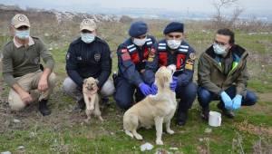 Jandarma ve polisten güzel çalışma Sokak hayvanlara yem dağıttılar