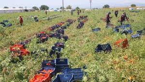 Manisa'da sebze ve meyve üretimi arttı