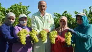 Yaş üzüm ihracatı başlıyor