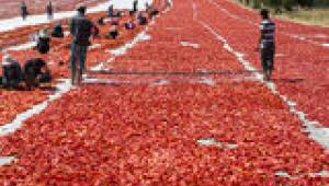 Türk kuru domatesi dünya sofralarını lezzetlendiriyor